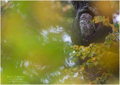 Herbst-Wald-Kauz
