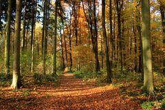Herbst - Wald - Weg