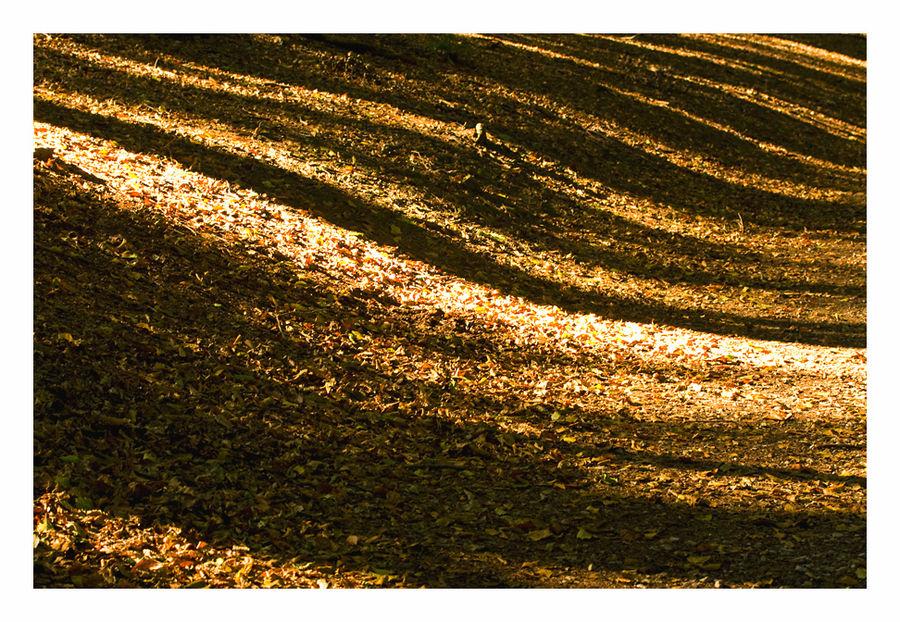 Herbst - Wald - Wellen