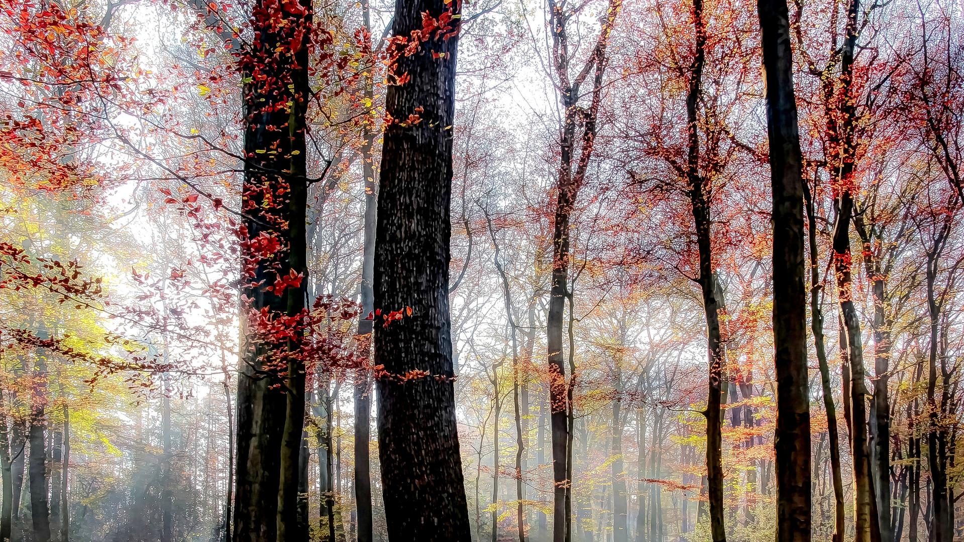 Herbst-Waldgeflüster