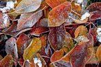 Herbst war