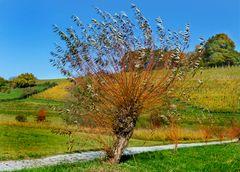 Herbst-Weide