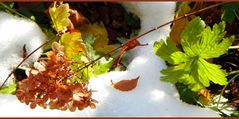 Herbst & Winter