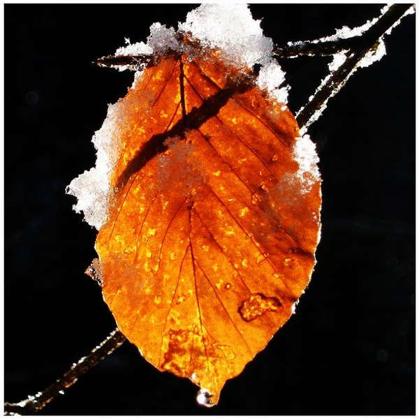 Herbst Winter Foto Bild Landschaft Makro Natur Bilder Auf
