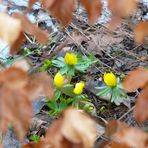 Herbst - Winter - Frühling