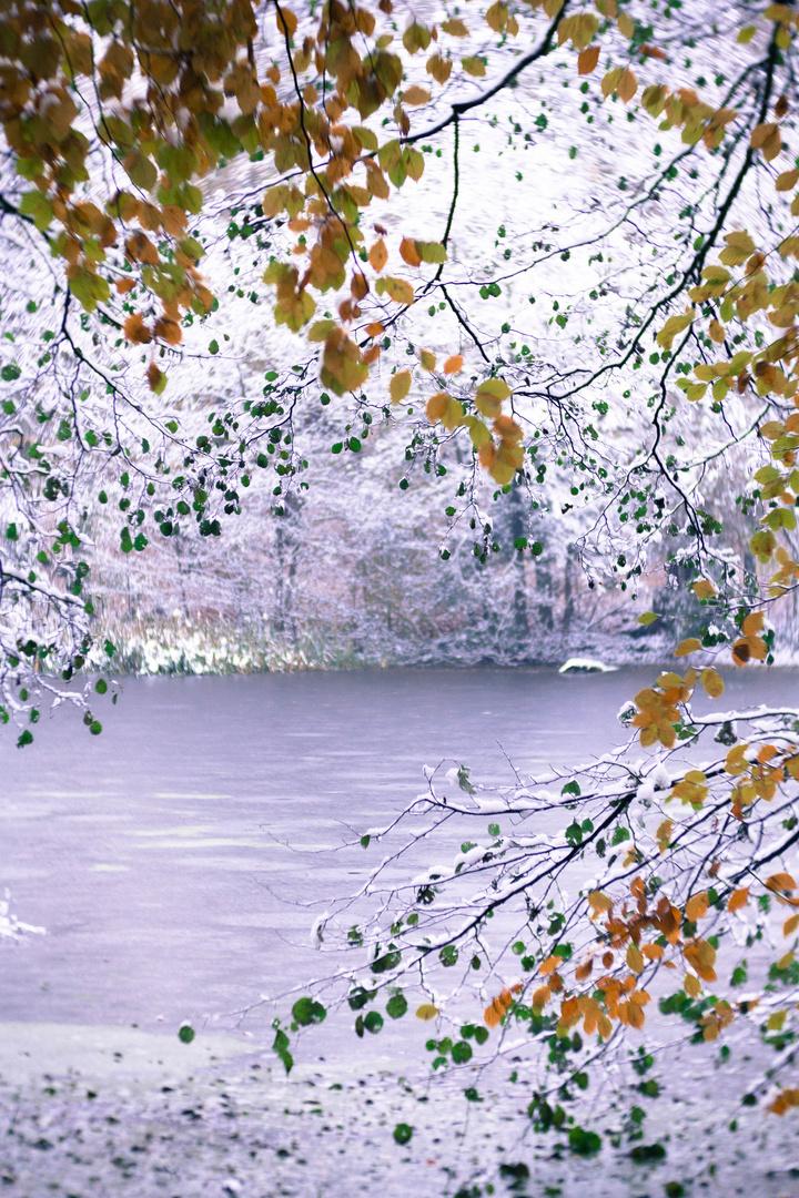 Herbst Winter Impressionen Foto Bild Forrest Baume Winter