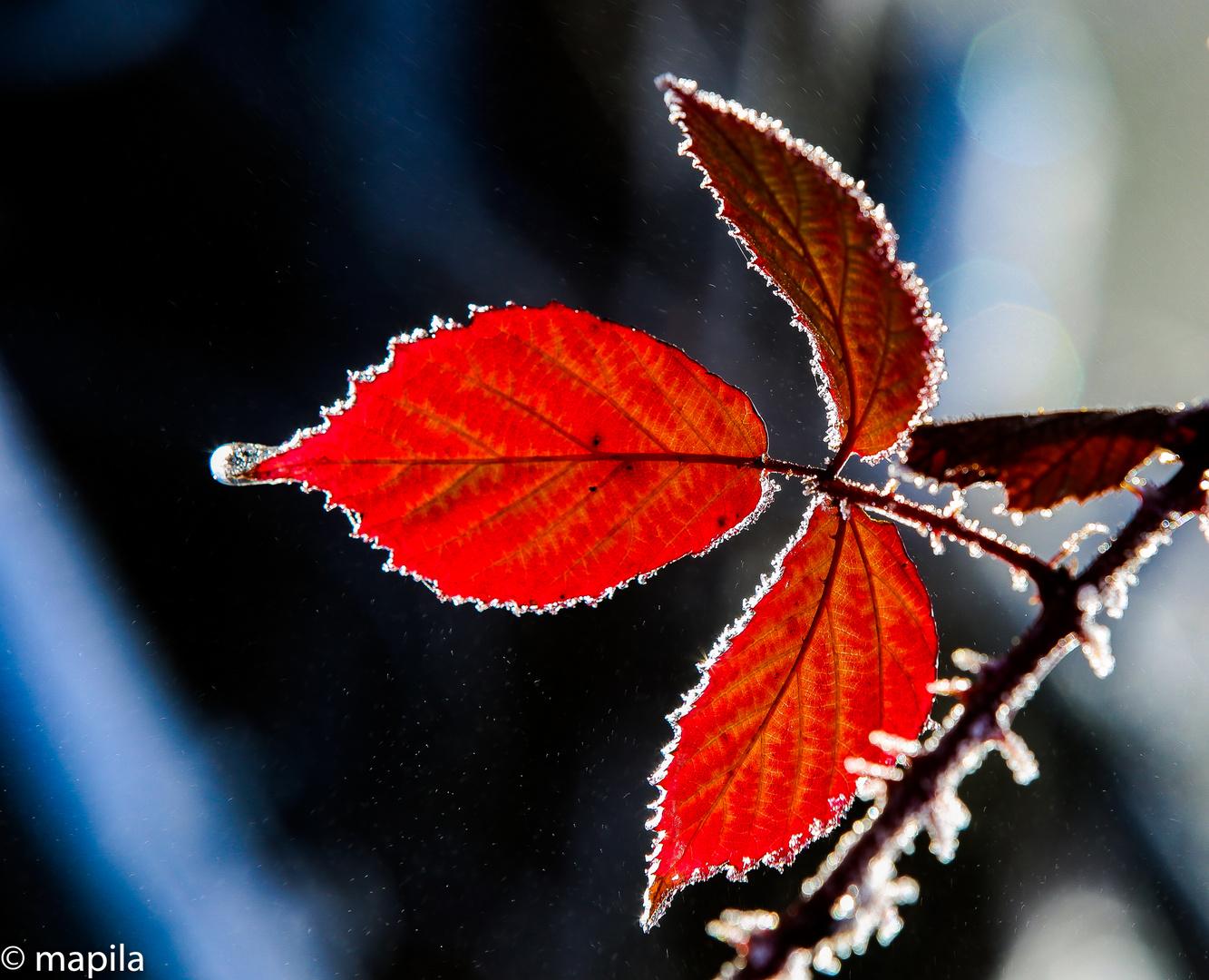 Herbst Winter Leuchten....rot