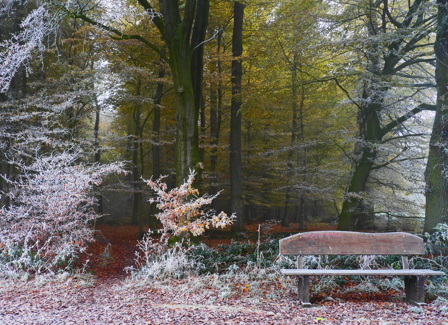 Herbst Winter Wald Foto Bild Wald Natur Herbst Bilder Auf