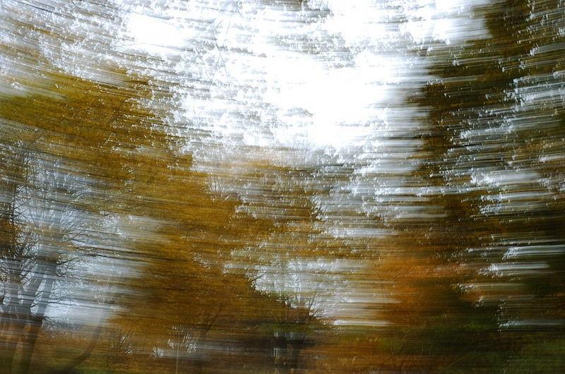 Herbst-Wischer