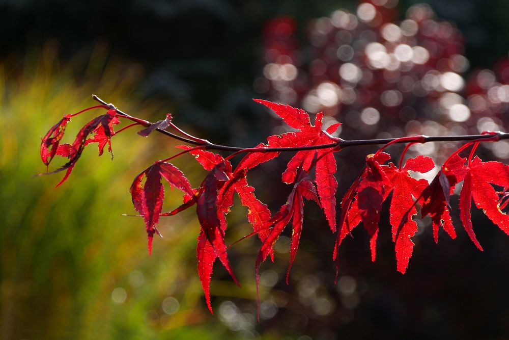Herbst Zauber...