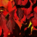 Herbst Zeichen 6