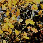 Herbst Zeichen 8