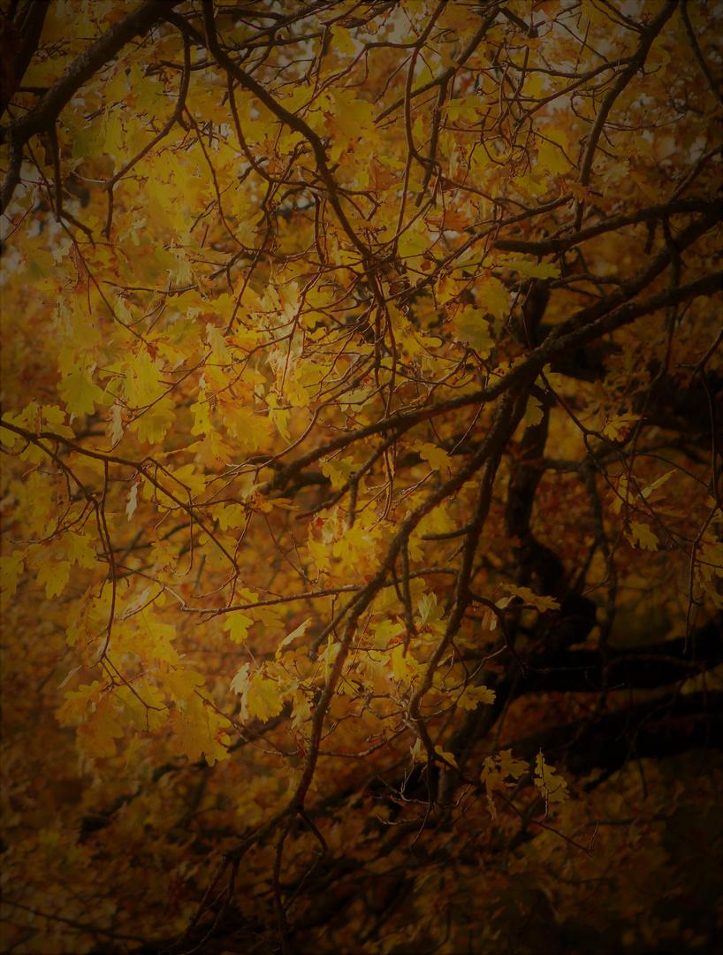 Herbst Zeichen 9