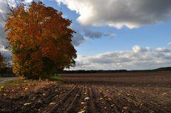 Herbstacker