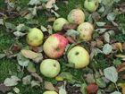 Herbstäpfel