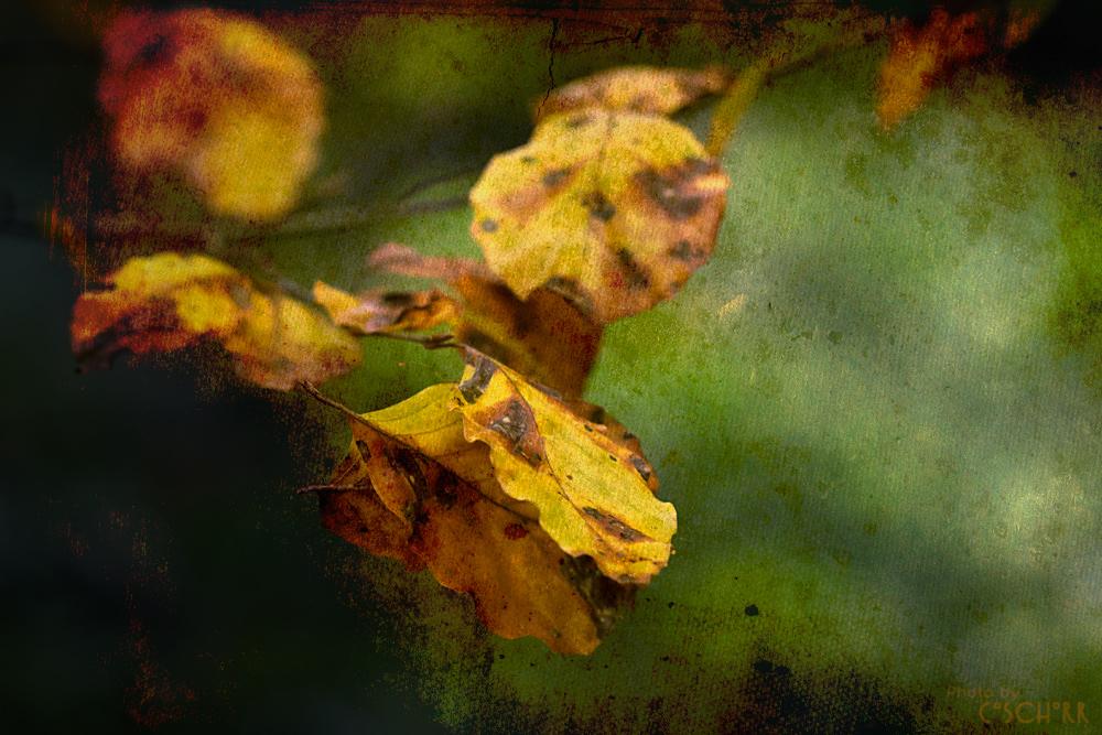 .Herbstahnung 2