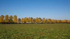 ... Herbstallee ...