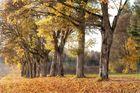 Herbstallee