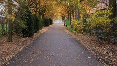 Herbstallee mit Gatter
