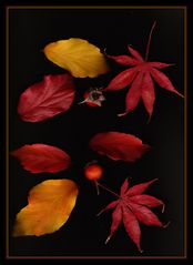 Herbstallerlei