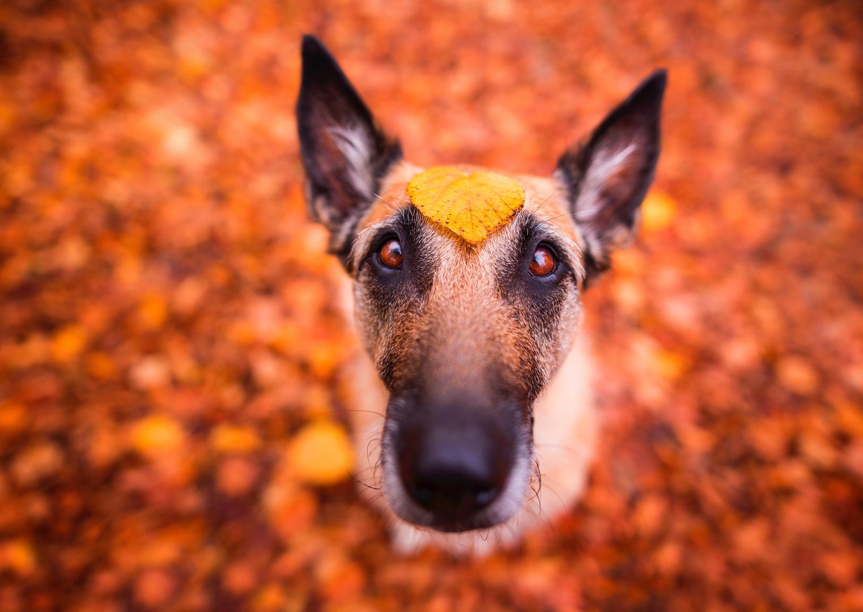 Herbstallerliebst
