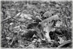 Herbstanfang - 3 -