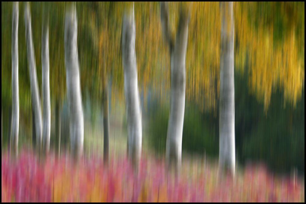 HerbstAnfang...