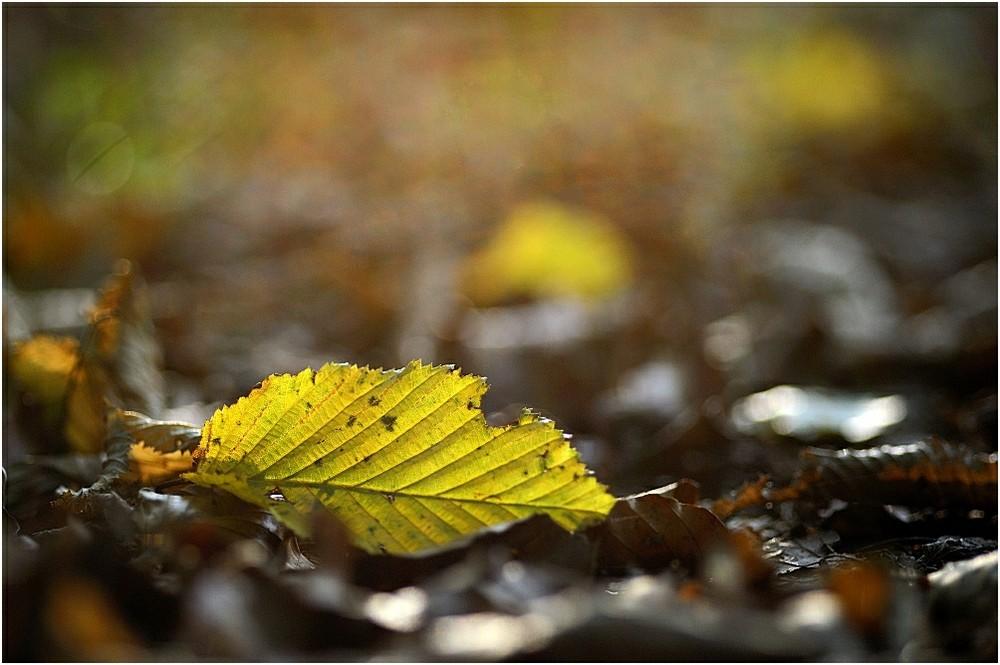 Herbstanfang