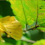 Herbstanfang III