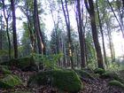 Herbstanfang in den hessischen Mittelgebirgen 4