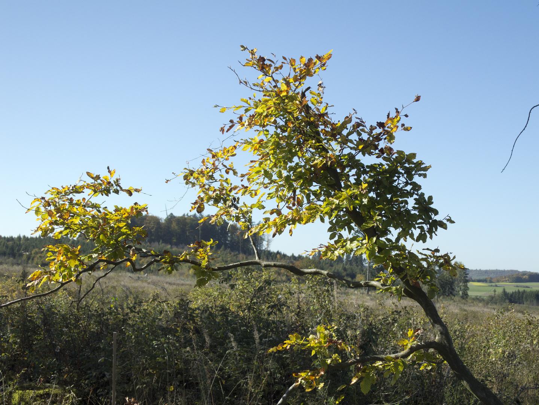 Herbstanfang in den hessischen Mittelgebirgen