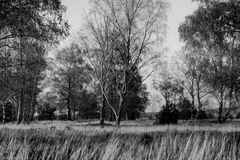 Herbstansicht 5343