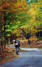 .... Herbstausflug mit der KTM .....