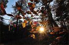 Herbstausklang