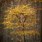 Herbstbäumchen