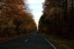 Herbstbäume (II)