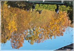 Herbstbäume im wasser