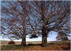 Herbstbäume in der Pfalz