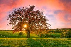 Herbst:Baum