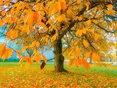 *** Herbstbaum in Lünen ***