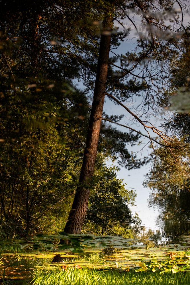 Herbstbeginn unter Seerosenblättern
