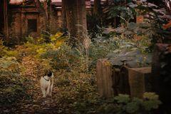 Herbstbekanntschaft