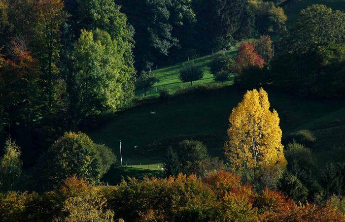 Herbstbirke