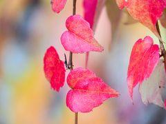 Herbstblätter 1