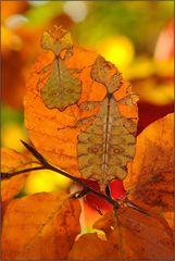 ~Herbstblätter 2~