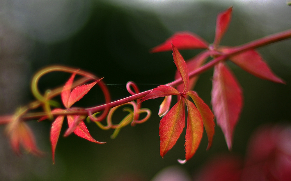 Herbstblätter...