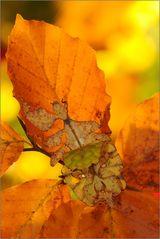 ~Herbstblätter~