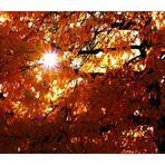 Herbstblätter II