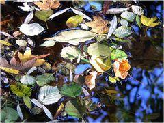 """Herbstblätter im Fluss"""
