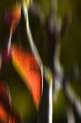 Herbstblätter im Klostergarten von Seligenstadt # 5229